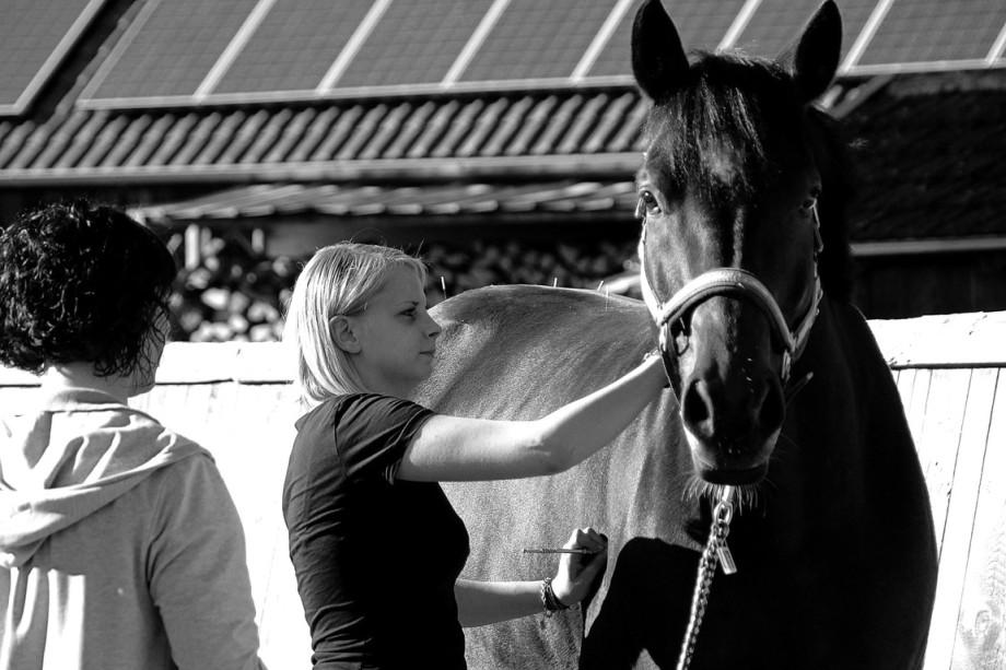 Isabella Seeberger bei der Arbeit mit einem Kundenpferd