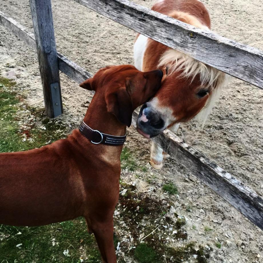 Hund und Pony auf Schmusekurs